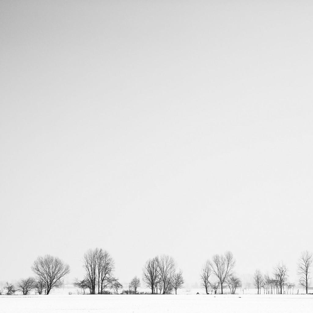 Fotografia naturalistica: paesaggio invernale in bianco e nero, pianura padana