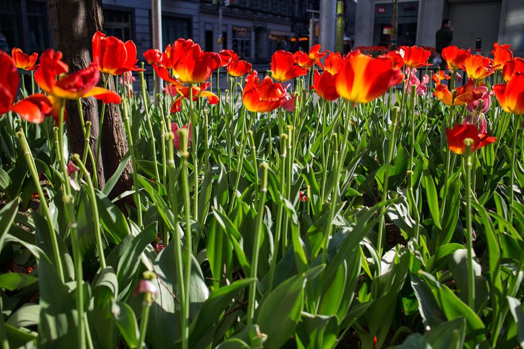 _nf - cafe sperl wien flowers