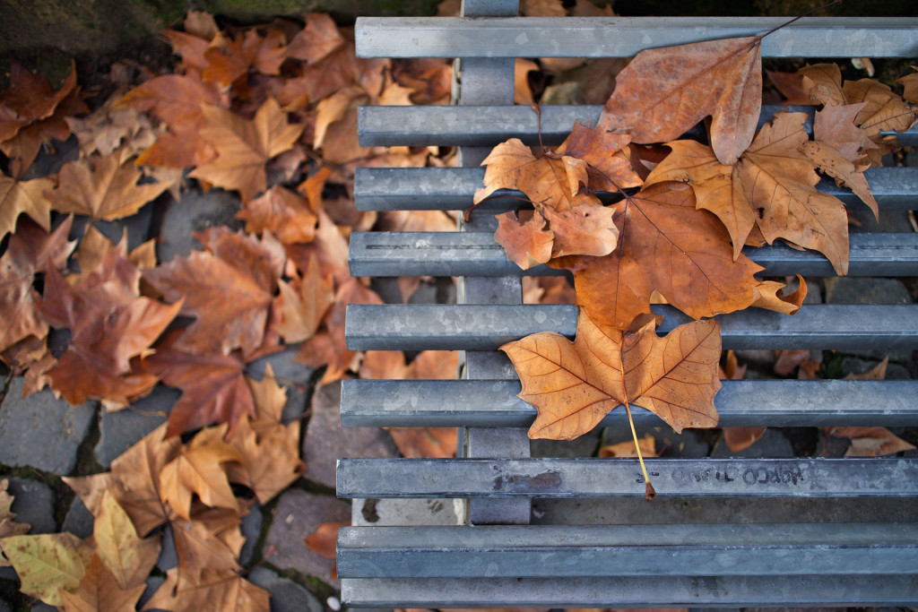 _nf-foliage