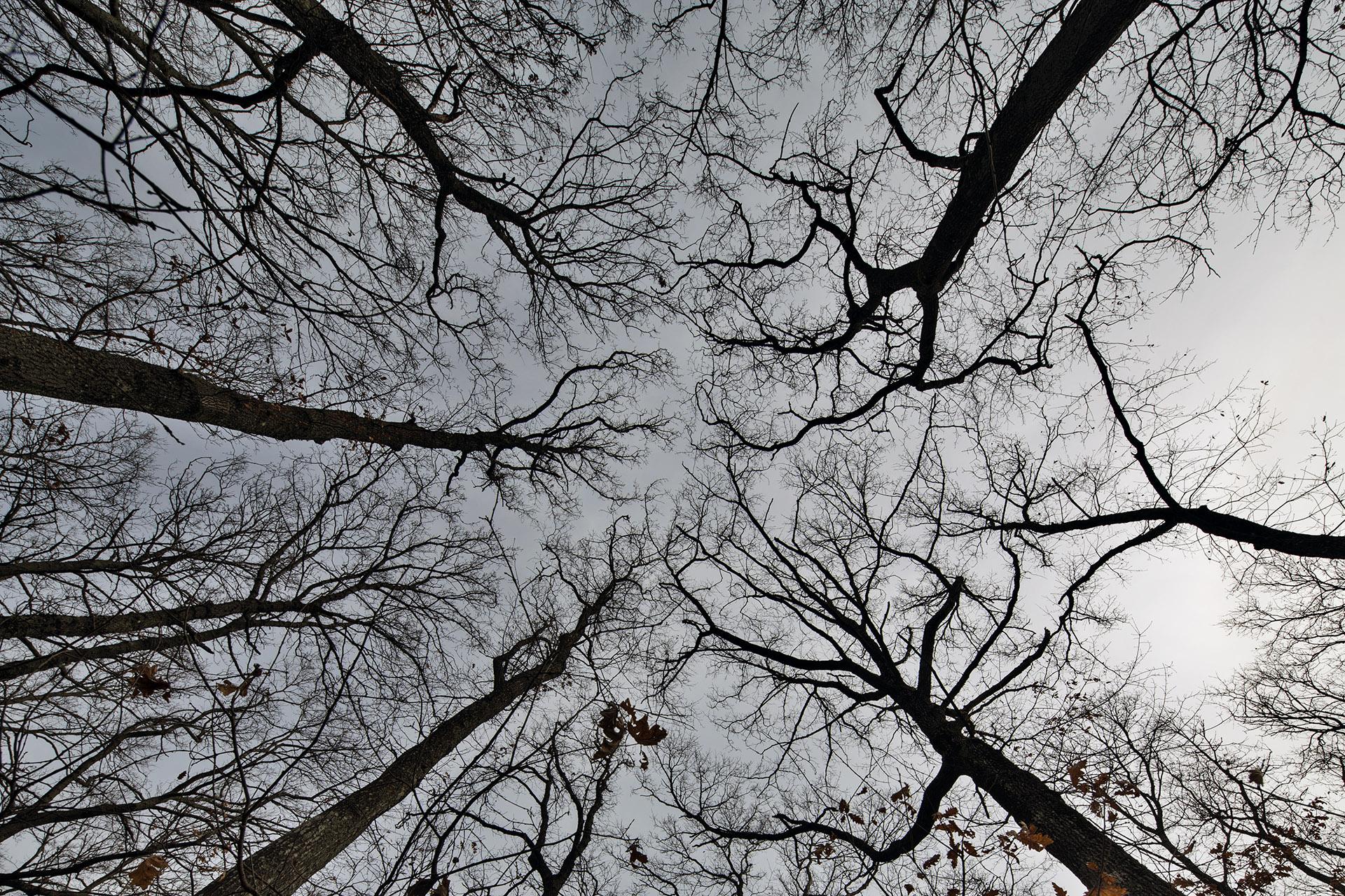 _nf-tuscia-tree
