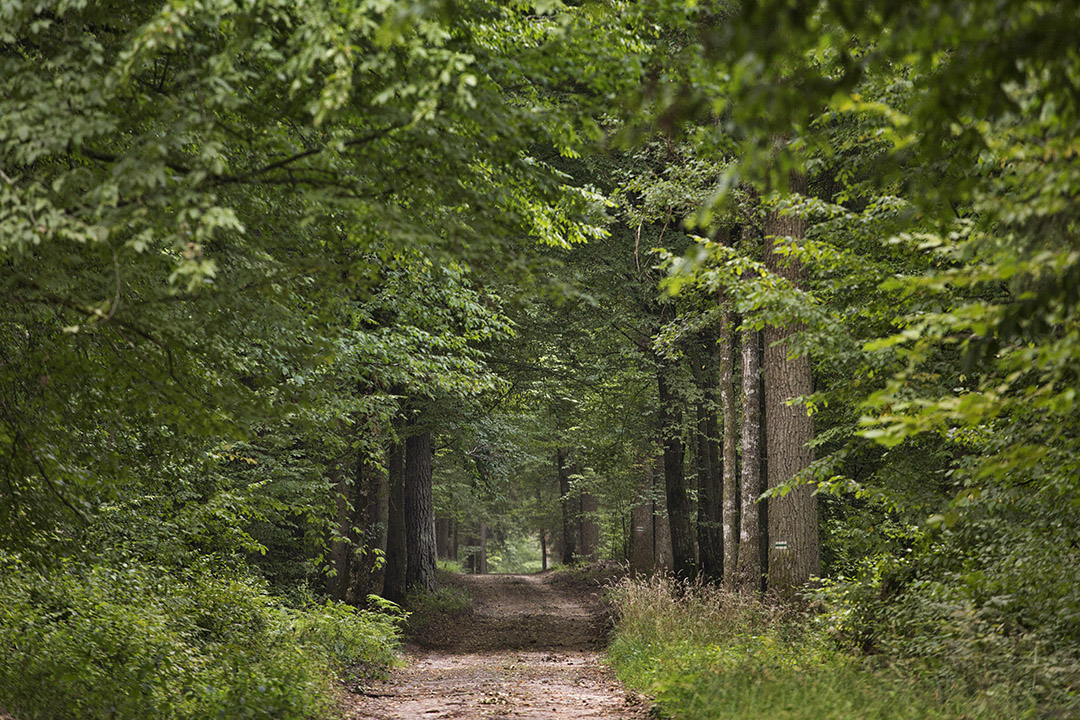 Road in Bialowieza forest