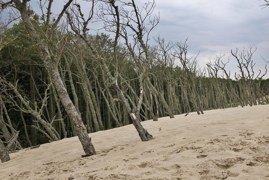 Slowinski Park: Dune mobili e alberi morti